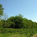 Wald des Herzogs d'Altemps