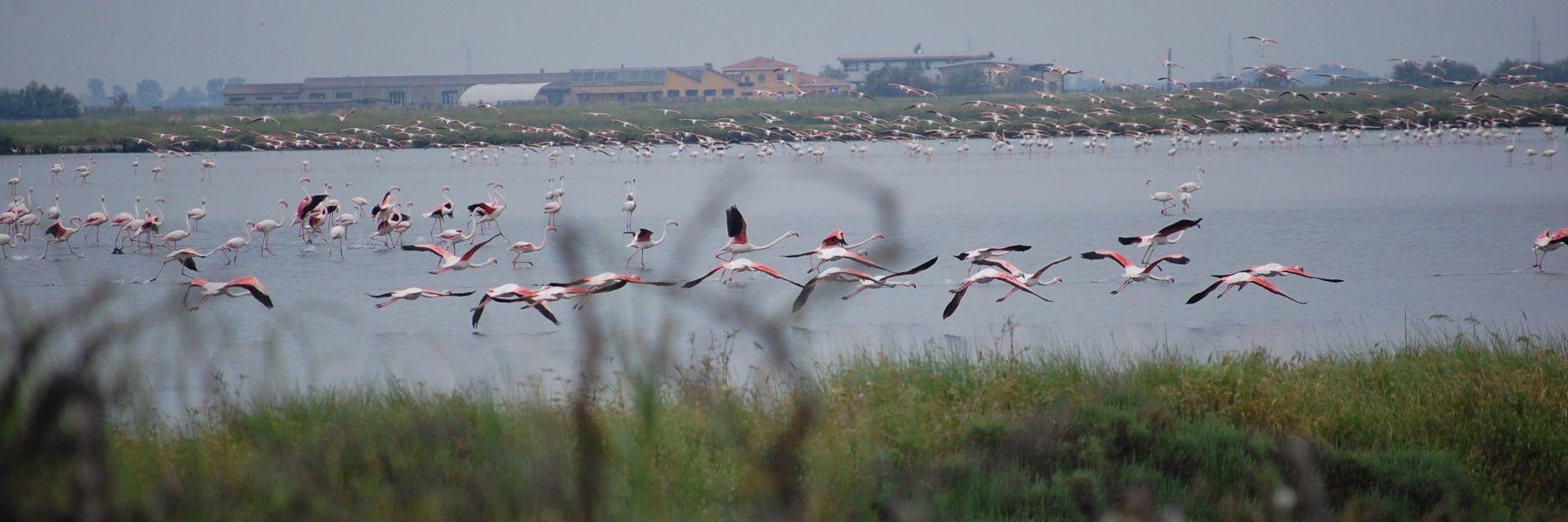 Birdwatching im Po Delta Park