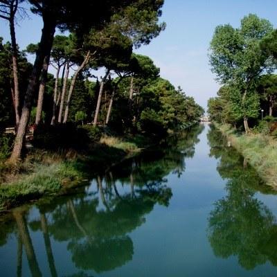 Der Pinienwald von Cervia - Milano Marittima
