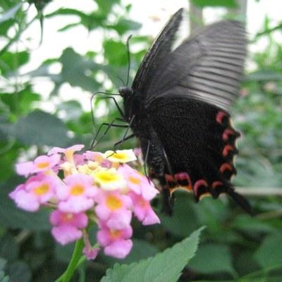Schmetterlingenhaus