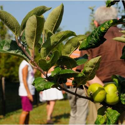 Der Botanische Garten der vergessenen Früchte