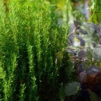 Bienen, Schmetterlinge, Blumen: Erdgartenausstellung Markt