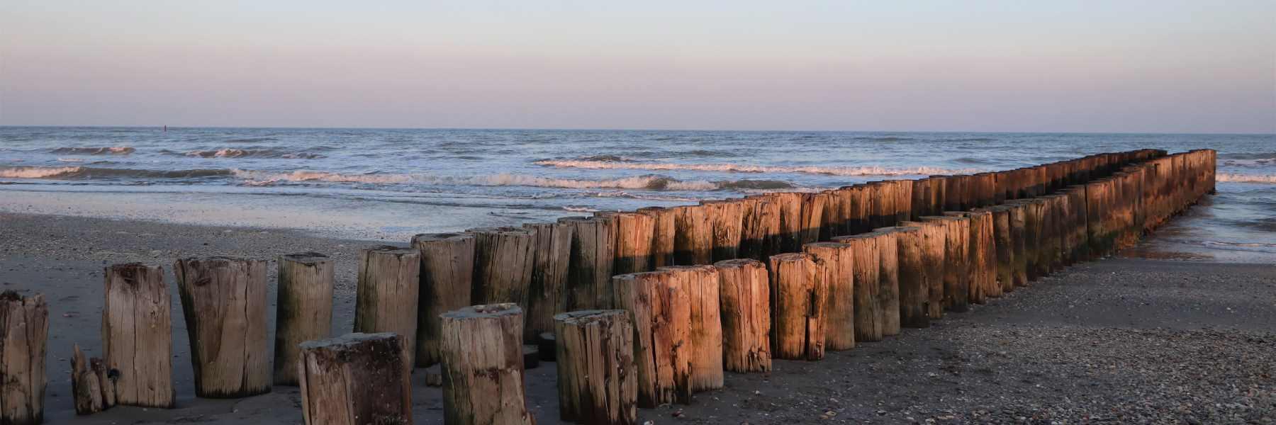 Mare, tronchi di legno - EN
