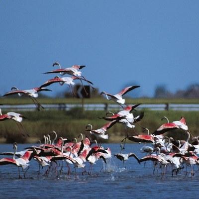Birdwatching Po Delta Park