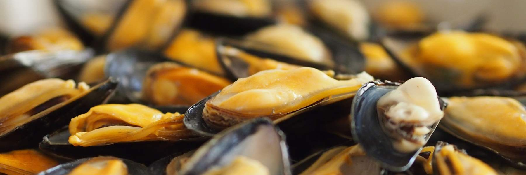 Cervia's mussels