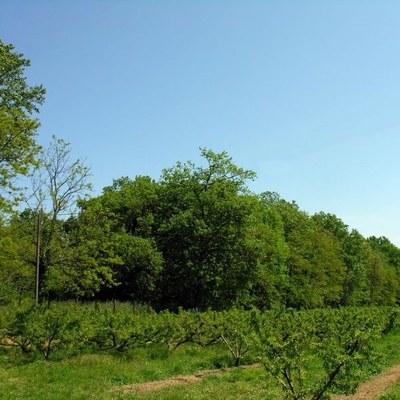 Bois du Duc d'Altemps