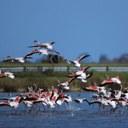 Birdwatching dans le Parc du Delta du Po