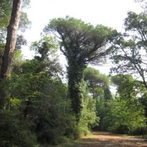 Sentiero Terme