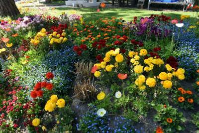 Giardini e aiuole, Cervia Città Giardino - Ph. Dany Fontana