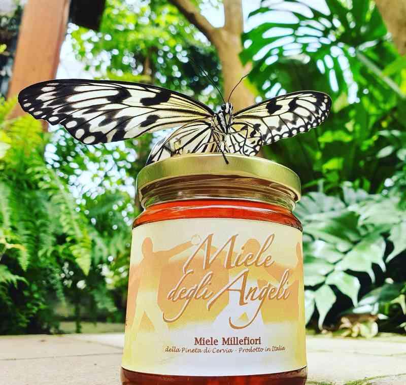 Il miele degli angeli, barattolo e farfalla