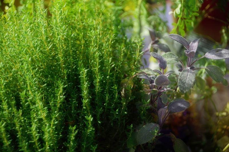 Le api, le farfalle, i fiori del giardino terrestre, erbe aromatiche