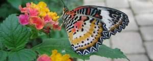Estate 2020 a Cervia, Casa delle Farfalle