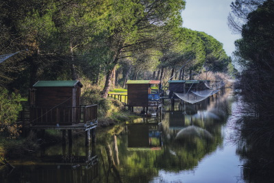 In the green pine forest, pine forest fishing huts  - Ph. Gruppo fotografico cervese