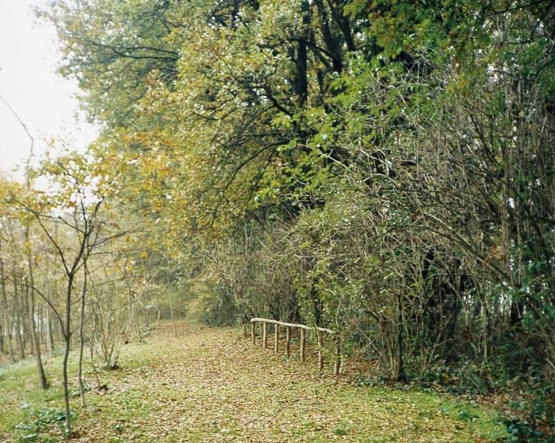Bosco del Duca d'Altemps, ingresso del bosco
