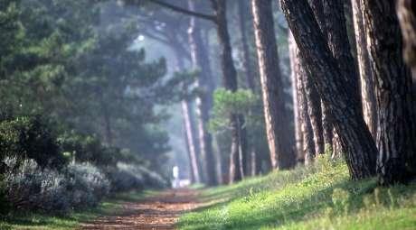 Pinienwald von Milano Marittima