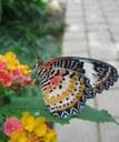 Casa delle Farfalle, farfalla sul fiore