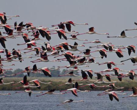 Flamingos in the salt pans