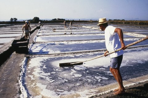 Salt harvesting in the Camillone Salt Pan