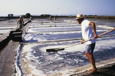 Salt harvesting in the Camillone Salt Pan