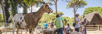 Cervia - Natural Park, goats and children