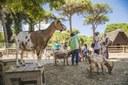 Parco Naturale di Cervia, caprette