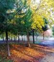 Pineta di Pinarella, autunno