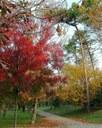 Pineta di Pinarella in autunno