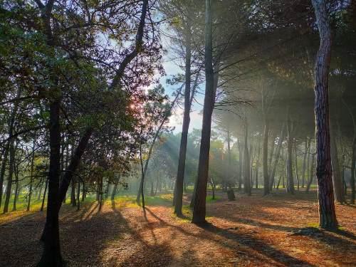 Pineta di Pinarella, luci - Ph. Juan David