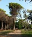 Pineta di Pinarella