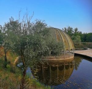 Die Kuppel des Woodpecker - Ph. Arianna Bertozzi