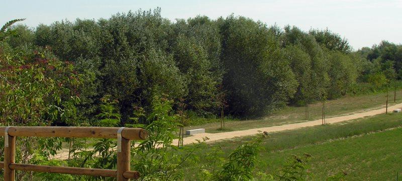 Il Parco Fluviale di Cannuzzo, sull'argine del fiume Savio