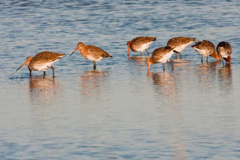 Uccelli in Salina