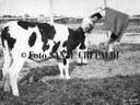 19 - Corrida con Silvano Collina, ph. Sante Crepaldi