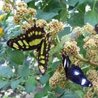 Festa di apertura Casa delle Farfalle