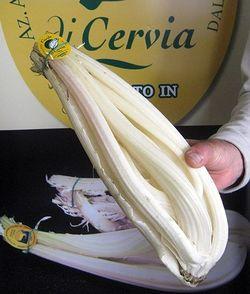 Il cardo dolce di Cervia