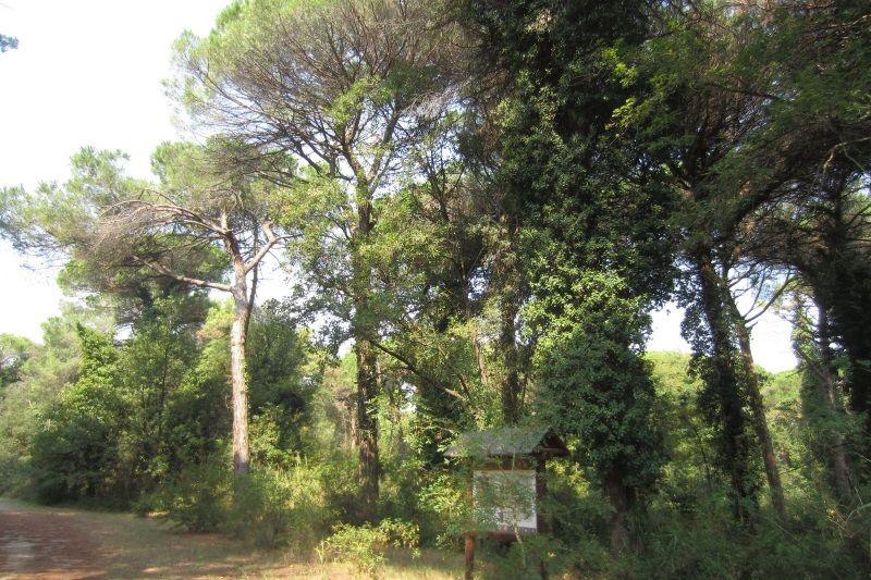 Festa della pineta, sentiero delle terme