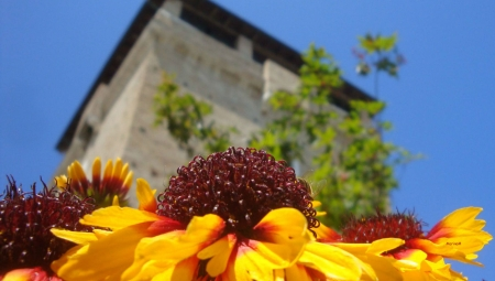 Torre San Michele - Marina Mingori 450x255
