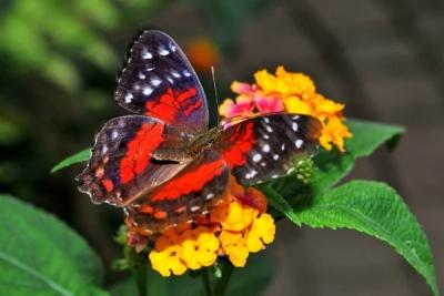 La Casa delle Farfalle & Co. , foto Florio Badocchi
