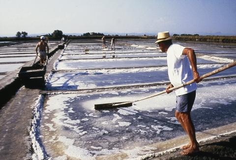 Antica salina Camillone, raccolta del sale