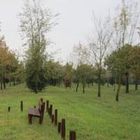 Bosco dei nuovi nati a Cervia Milano Marittima