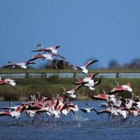 Birdwatching Parco del Delta del Po Stazione Sud